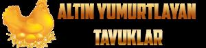 Altın Yumurtlayan Tavuklar ile Oyun Oyna Para Kazan